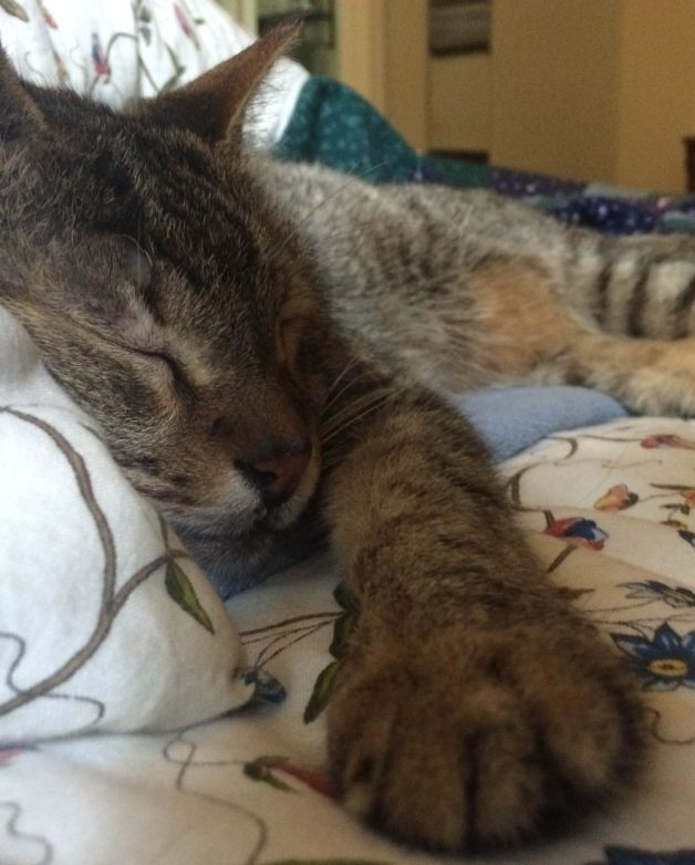 champion sleeper