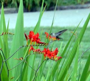 hummingbird--a closer view