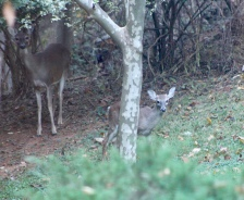 backyard visit